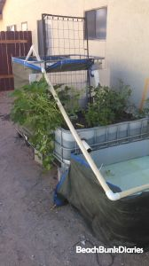 The back tank is a fish tank, the middle is a grow bed, and the bottom is a sump tank, where the pump sits to push the water back into the fish tank.