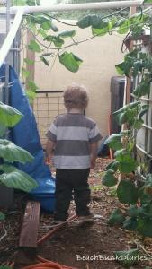 Secret Garden1